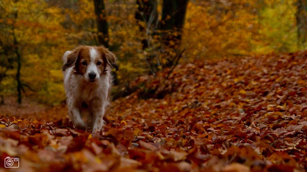 Verblijf met de hond bij Hotel Landgoed Ehzerwold in Almen