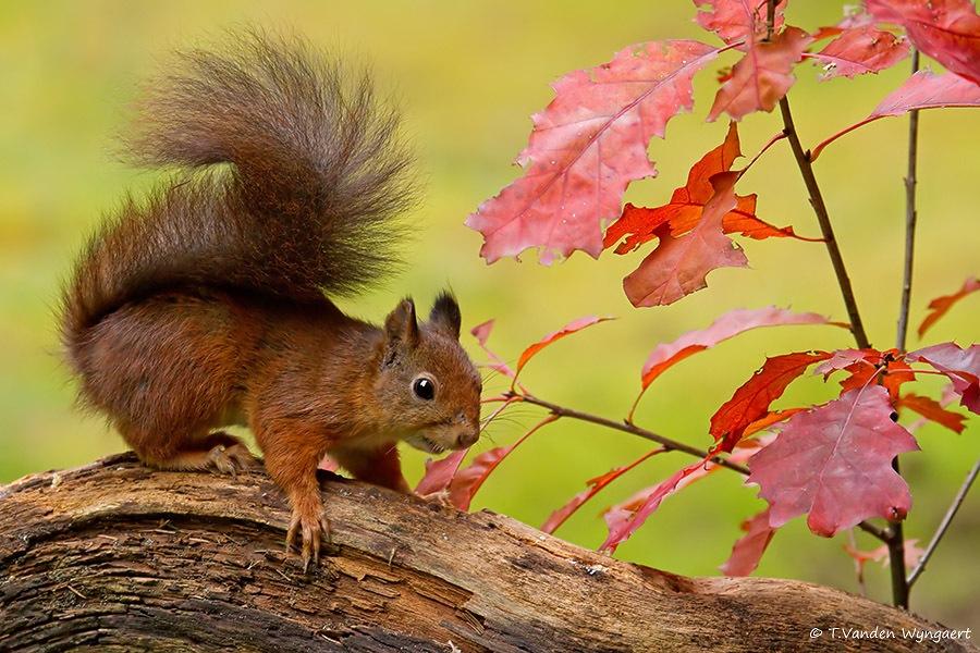Schattige eekhoorn in de Herfst